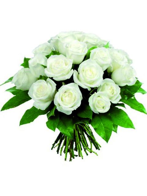 18 roselline bianche a domicilio