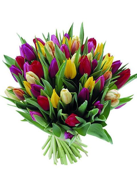 bouquet di tulipani colore pastello