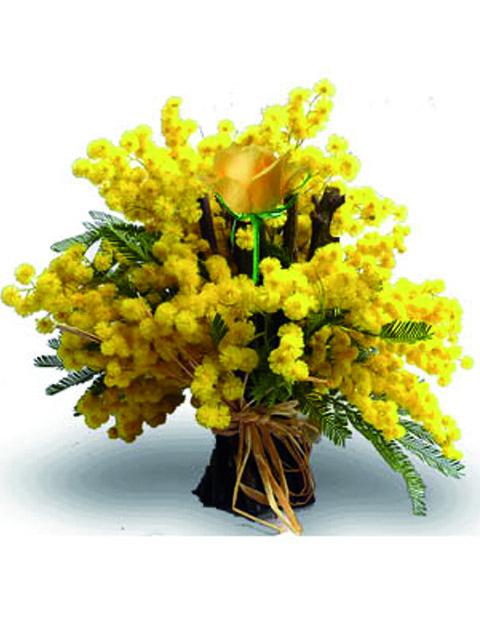 mimosa con una rosa gialla
