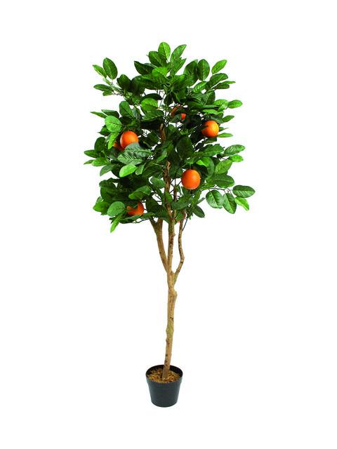 pianta di arancio a domicilio