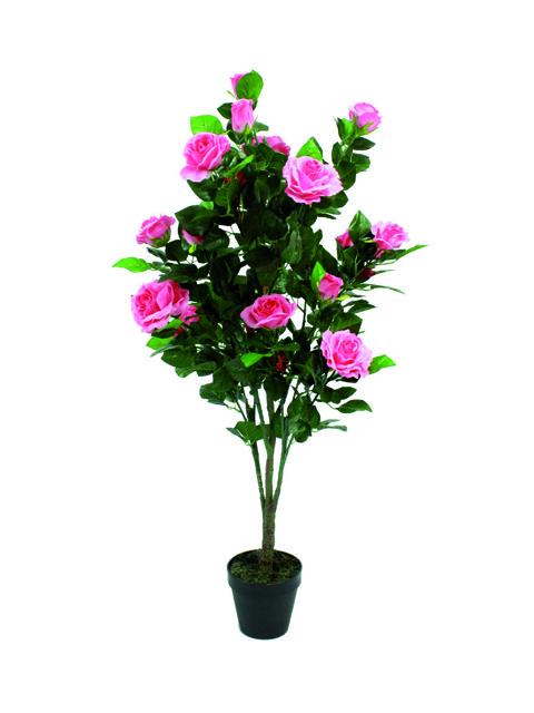 pianta di rose rosa a domicilio