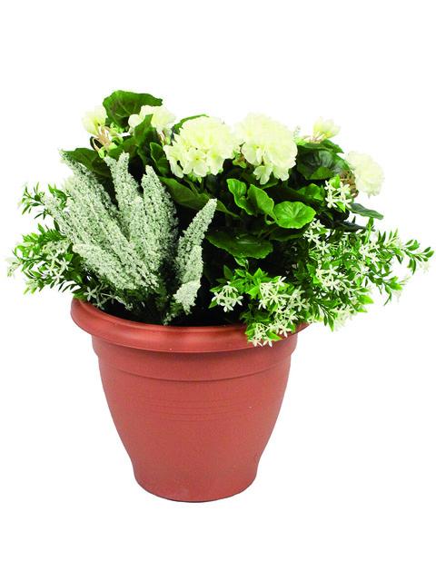pianta di geranio bianco a domicilio